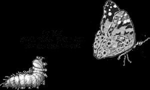 """Eine Raupe ruft dem davonfliegenden Schmetterling ärgerlich nach: """"Du bist auch nicht mehr, wer Du mal warst!"""""""