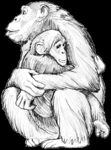 Schimpansenmutter hält ihr Baby fest im Arm