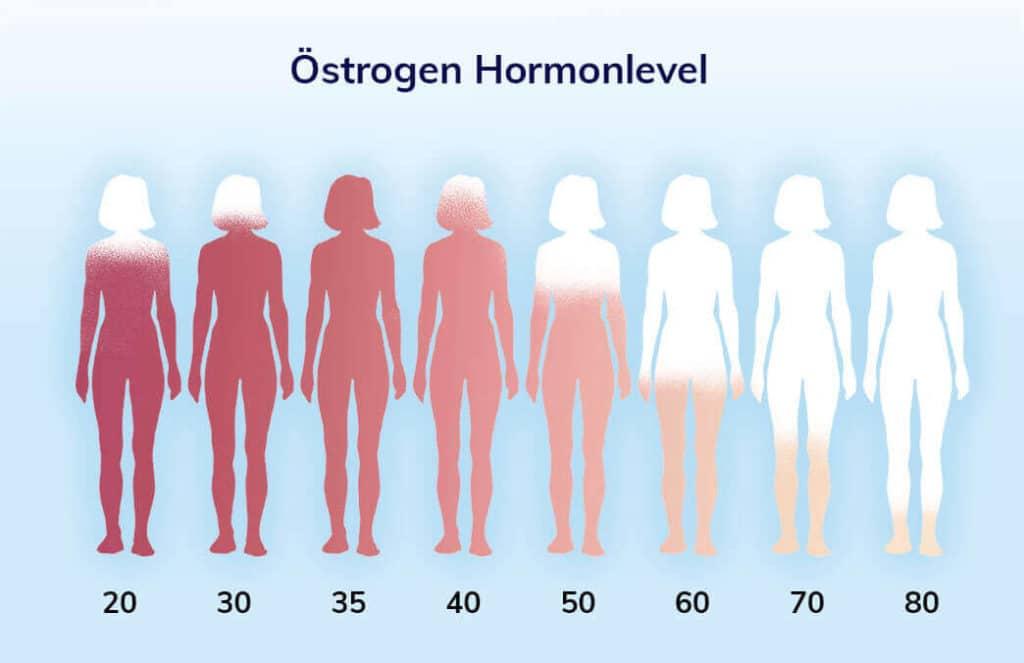 oestrogen-hormonlevel